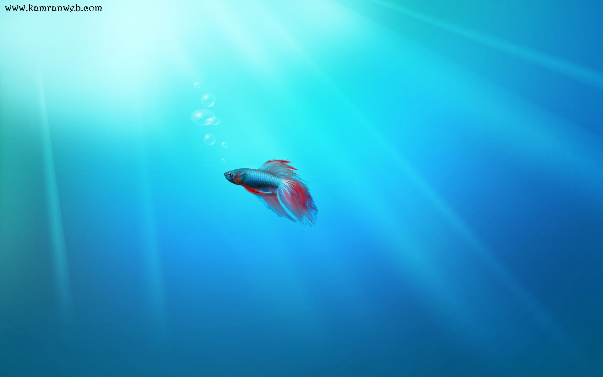 Window 7 Fish Wallpapers